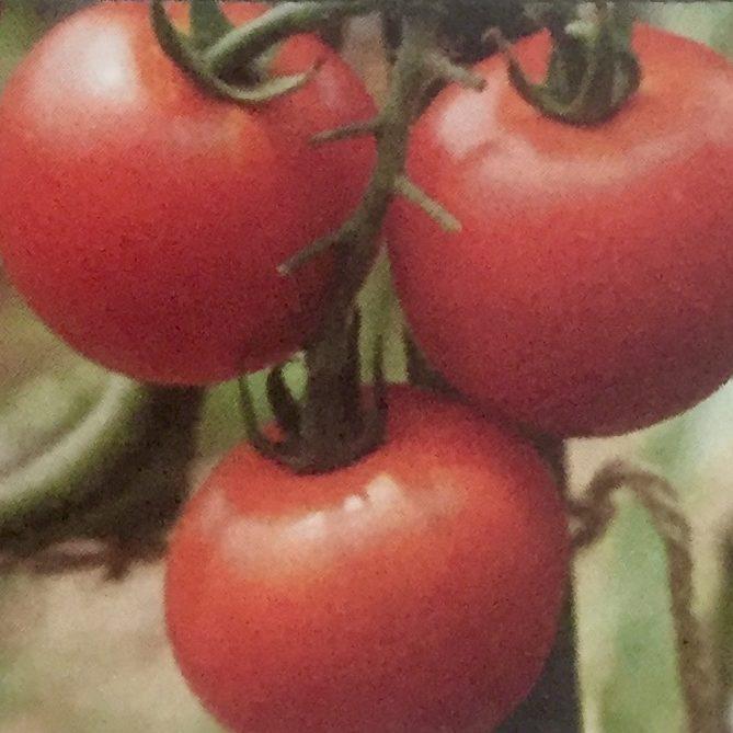 ミニトマト7